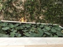 Bán nhà khu Làng Báo Chí, P. Thảo Điền, Quận 2, DT 10x12m, trệt 1 lầu giá tốt 9.5 tỷ 090.270.4314